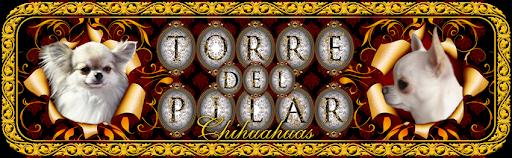 Torre del Pilar Chihuahuas English