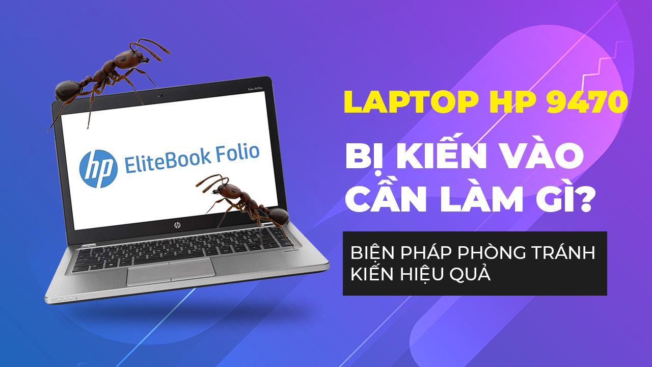 Laptop HP 9470 bị kiến vào cần làm gì? Biện pháp phòng tránh kiến hiệu quả
