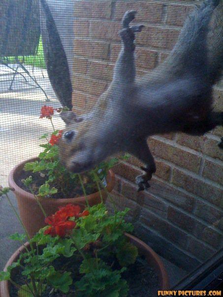 photo of a squirrel hanging on  screen door