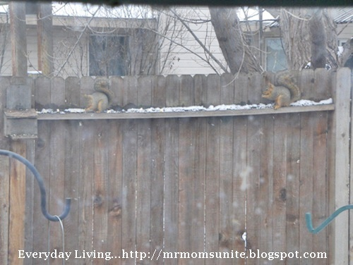 photo of two squirrels eating on the fence