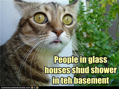 photo of a cat with big eyes:people in glass houses should shower in the basement