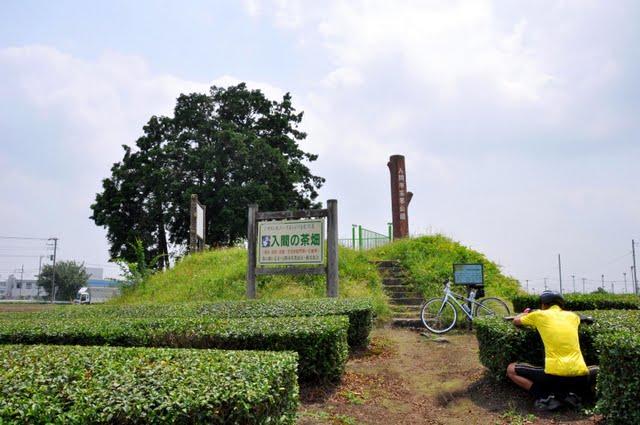 茶業公園全景