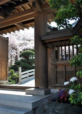 門外から桜