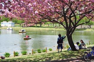 八重桜の下でのんびり