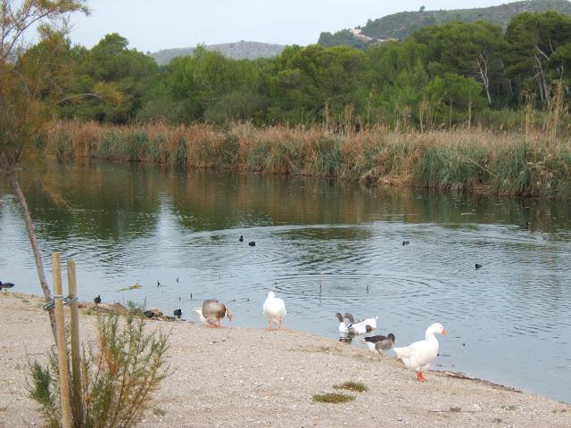Canyamel/ Cala Ratjada, Mallorca