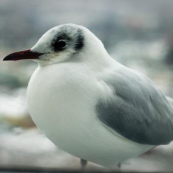 uccelli e natura