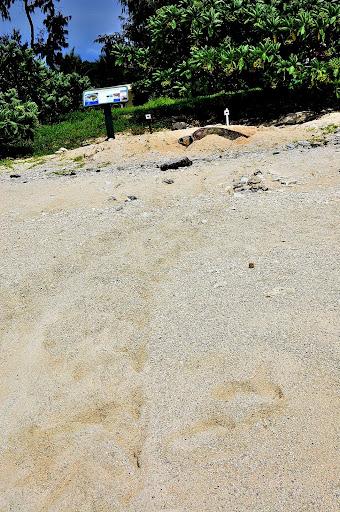 ウミガメの足跡の写真