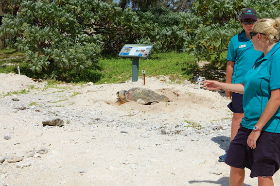 ウミガメの産卵・レディエリオット島の写真
