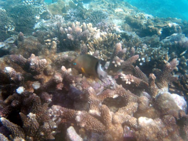 さんご礁と魚・レディエリオット島の写真