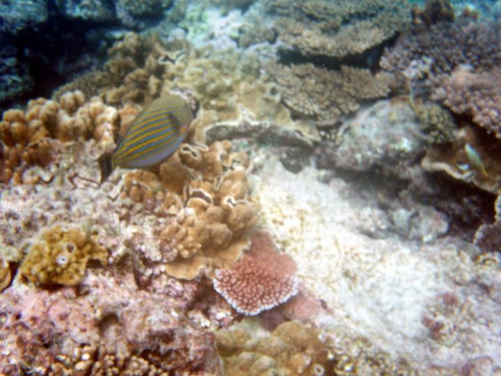 レディエリオット島のサンゴと魚の写真