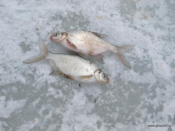 рыбалка в д. фролково
