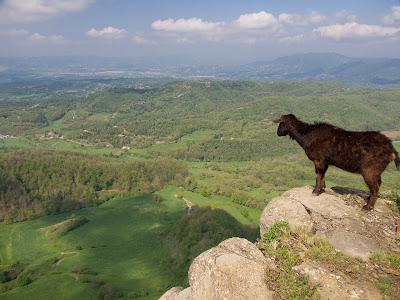 La Cabra al cim de l'Agullola de la Tuta