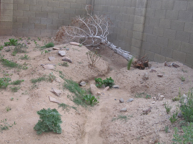 Backyard Desert Reptile Enclosure
