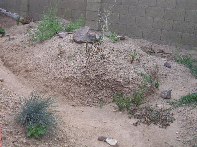 Outdoor Uromastyx Enclosure