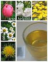 ชาดอกไม้ 5 ชนิด 5in1 Flowers Tea