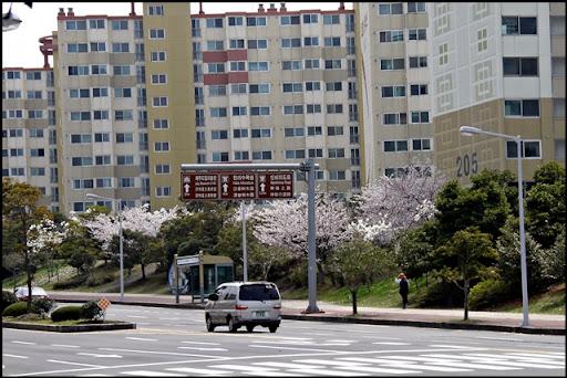 Life in Jeju 67 เรื่อยๆ ที่บ้าน และดอกไม้บานในสวน