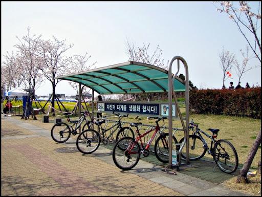 Life in Jeju 68 Jeju Cherry Blossom Festival 2011