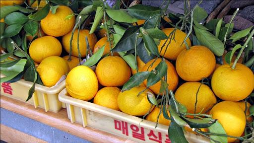 Life in Jeju 73 วัดซันบังกูซะ และเข้าครัวทำอาหารไทยเลี้ยงเพื่อนแบบไม่ได้แพลนล่วงหน้า