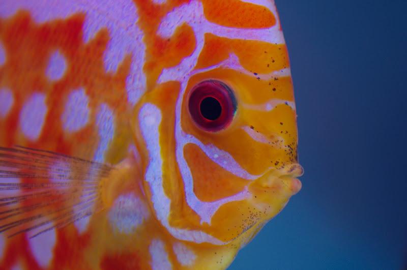 七彩魚第一次紀念照XD