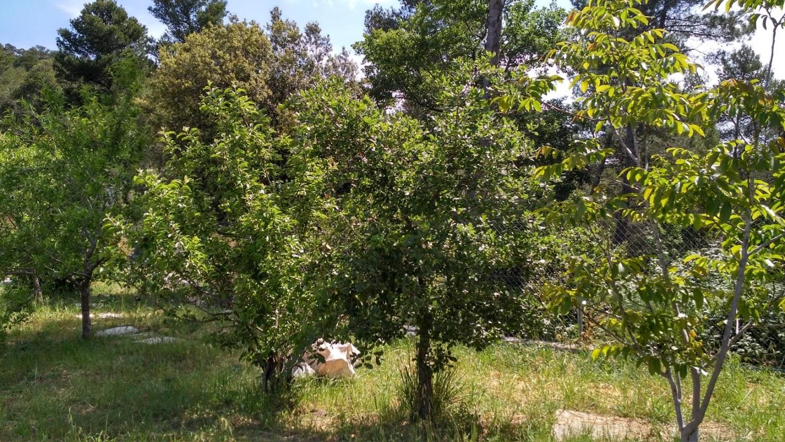 Nuevos bosques comestibles Safarí 2