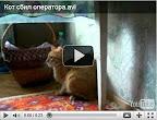 Смешные ролики о котах