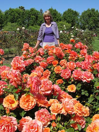 SJ Rose Garden