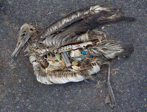 プラスチック鳥(Midway)