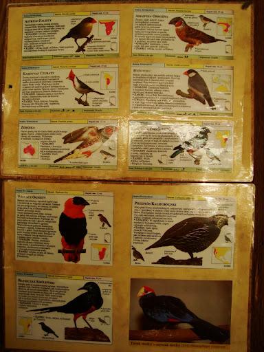Opisy całej dziesiątki żywcem wzięte z książki o ptakach...