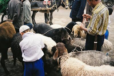 ひもでつながれる羊