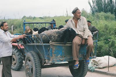 羊を運ぶトラック