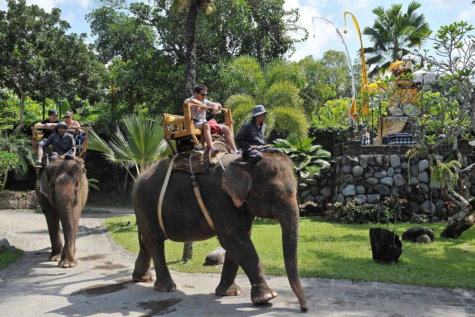 gajah bali beritadaerahcoid.jpg