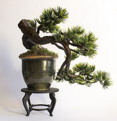 bonsai modelo han-kengai