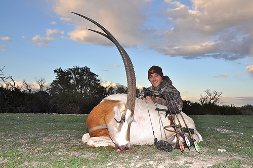 Scimitar Horned Oryx Hunting