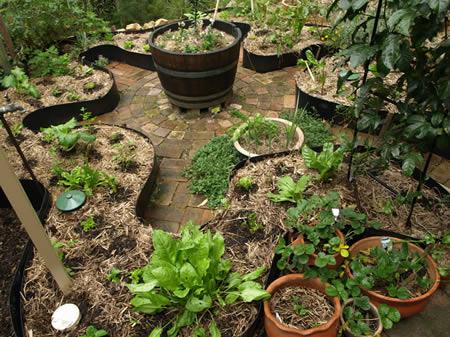 Transi o 3 0 postado especial de permacultura special for Permaculture petit jardin