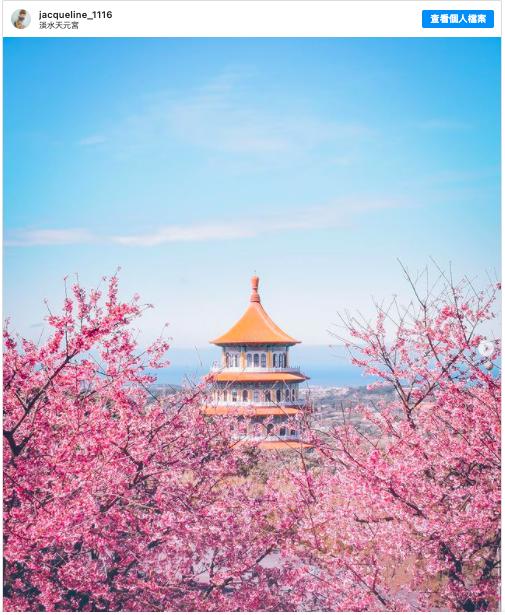 2021新春假期 到新北淡水天元宮看櫻花
