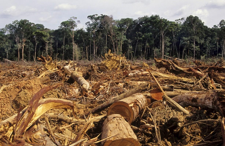 http://www.ecoosfera.com/wp-content/imagenes/Deforestation-Amazon.jpg