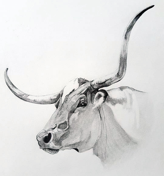drawing of a longhorn