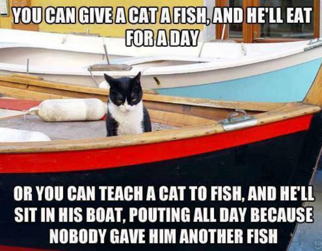 Fishing cat memes