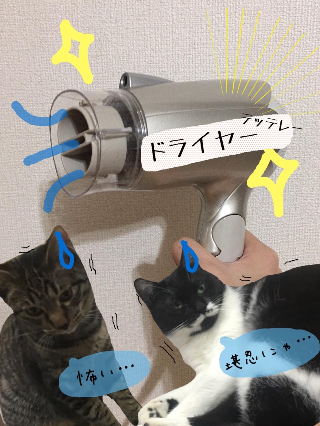 猫が大嫌いなドライヤーと掃除機についてとお風呂上りに乾かすおすすめグッズまとめ