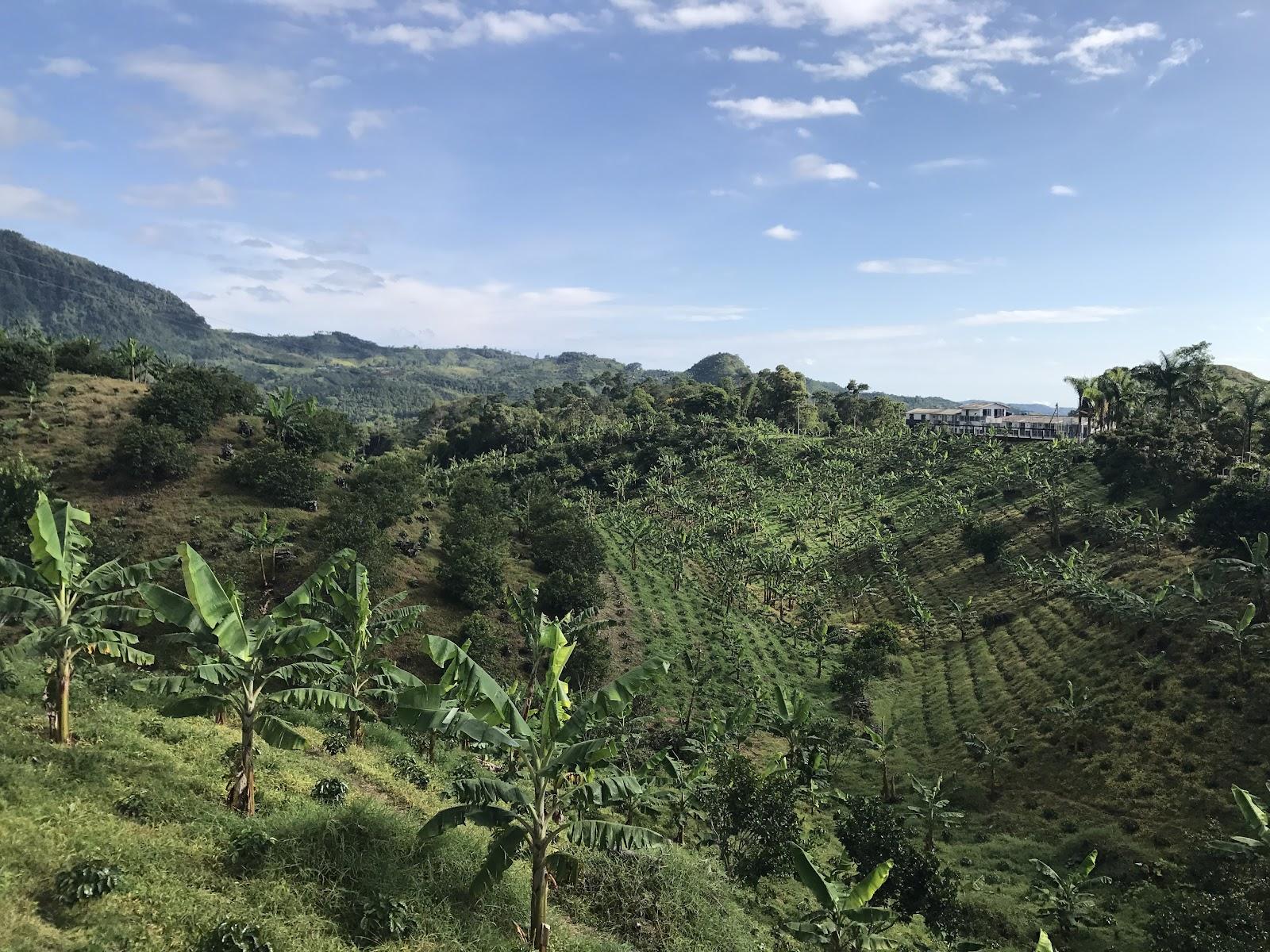 Colombian coffee fields on Hwy 50 on bike climb to Alto de Letras