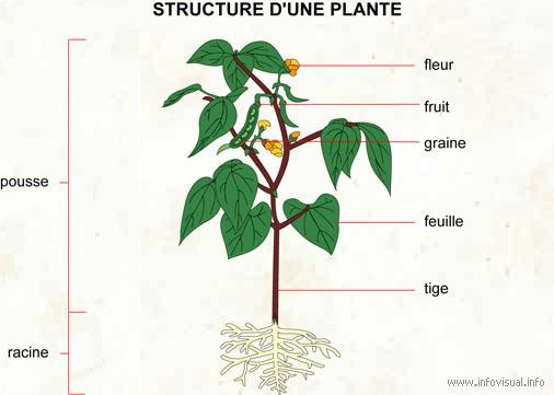 I Les Besoins De La Plante
