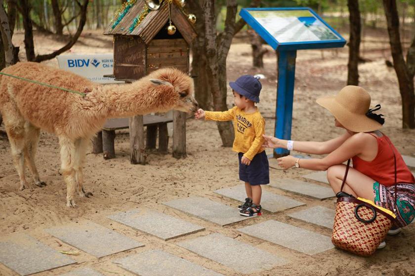 Trải nghiệm cho động vật ăn tại FLC Zoo Safari Park Quy Nhơn