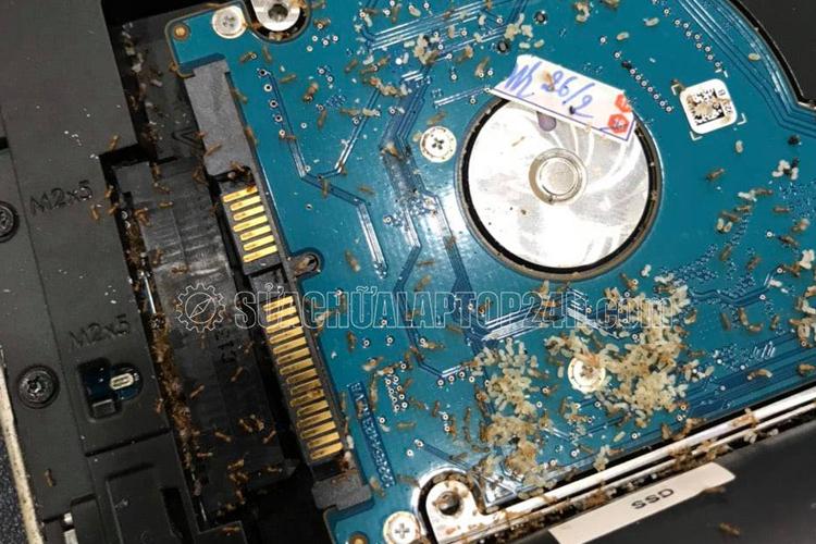 Laptop HP 9470 bị kiến vào làm tổ