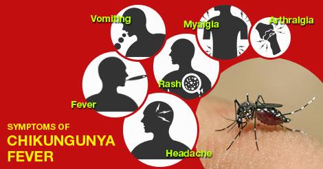 chikungunya-fever.jpg