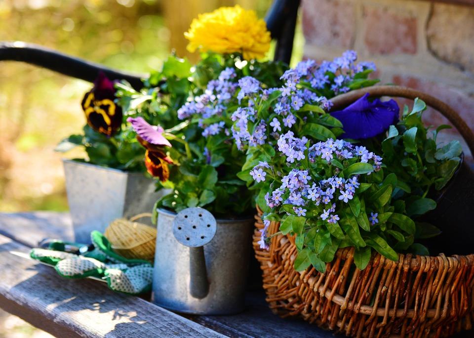 Plant-Flowers-Garden-Gardening-Spring-Flowers-2179528.jpg