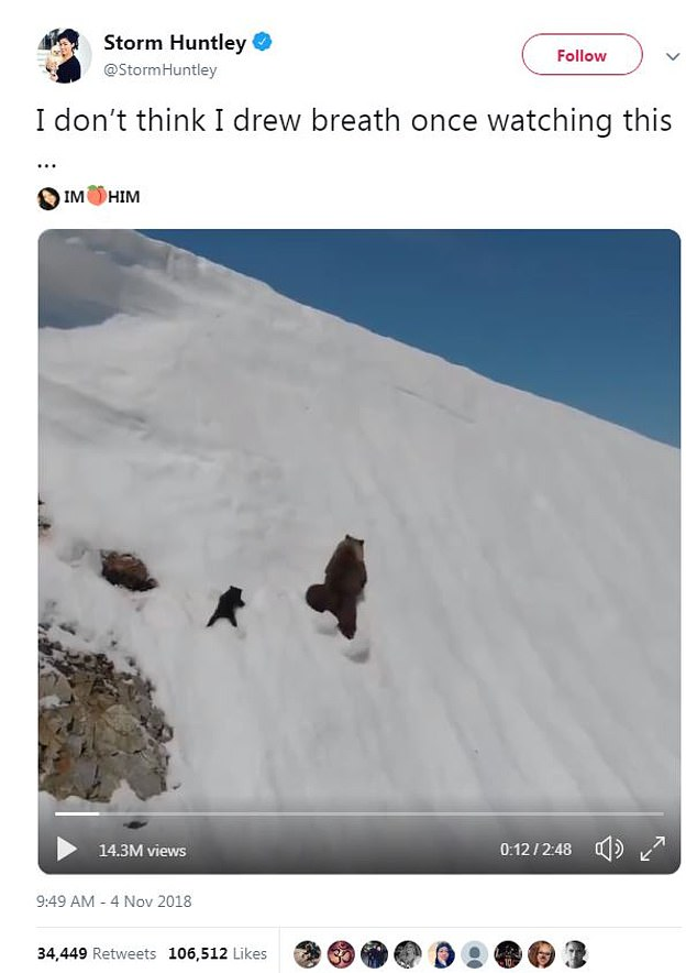 Đoạn clip chú gấu con leo núi truyền cảm hứng cho hàng triệu dân mạng với thông điệp Đừng bao giờ bỏ cuộc nhé!!! - Ảnh 5.