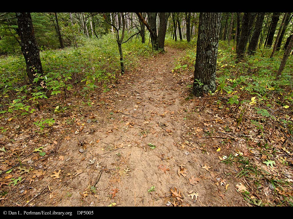 What is the soil in the forest steppe Type, features 49