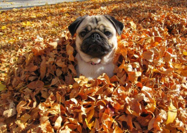 Image result for animal jumping into leaf pile