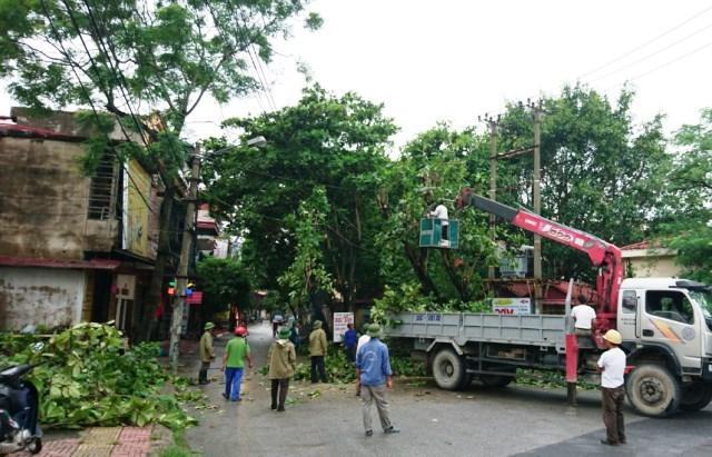 Đa dạng dịch vụ cắt tỉa cây ở Tây Ninh
