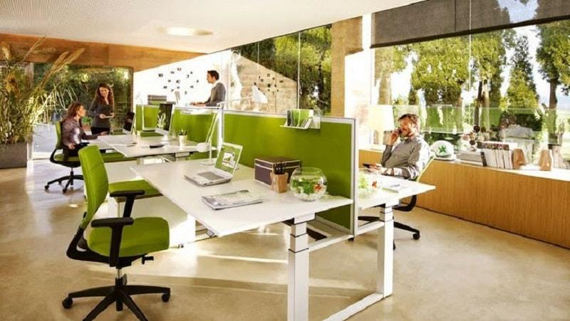 thiết kế thi công nội thất văn phòng có cây xanh